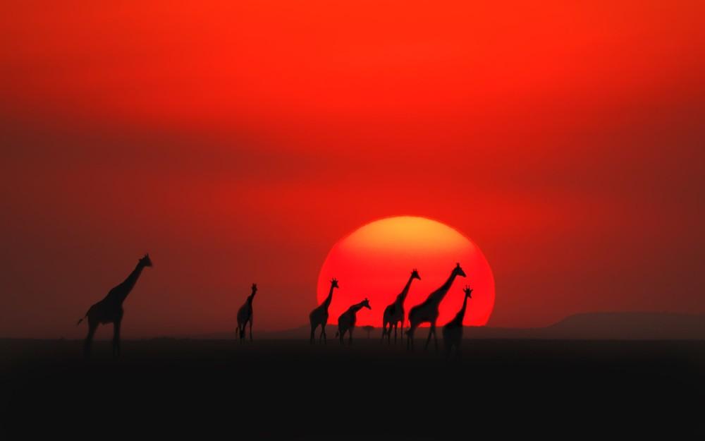 Maasai-Mara-National-Reserve-Kenya1 giraffes - Jasmin Please blog