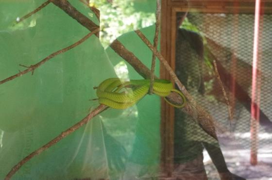 Reptile Green snake Haller Park Mombasa