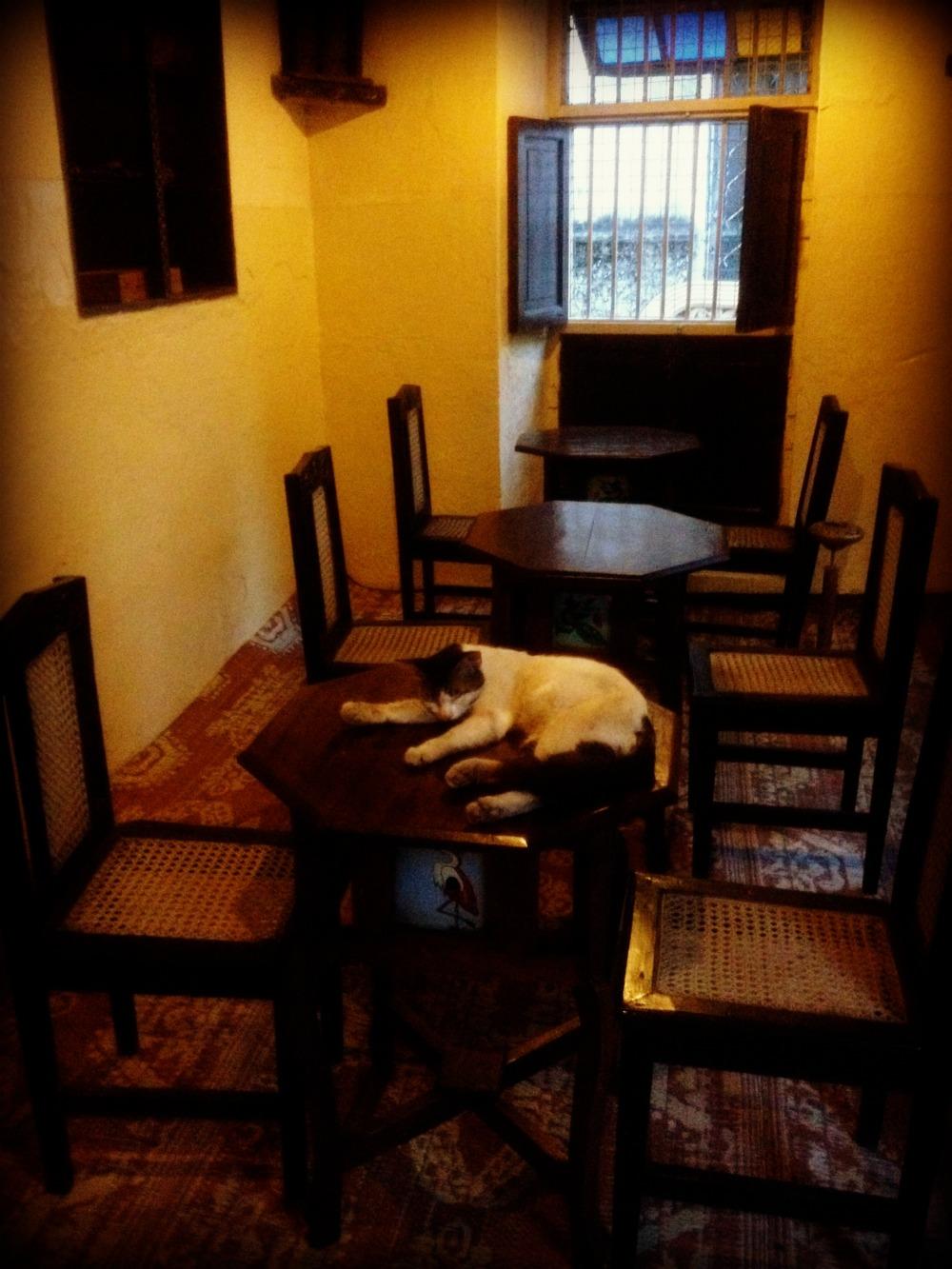 Jahazi Coffee house Mombasa Old Town Kenya Africa Cat Restaurant