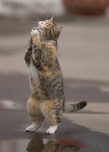 begging-cat-215x300