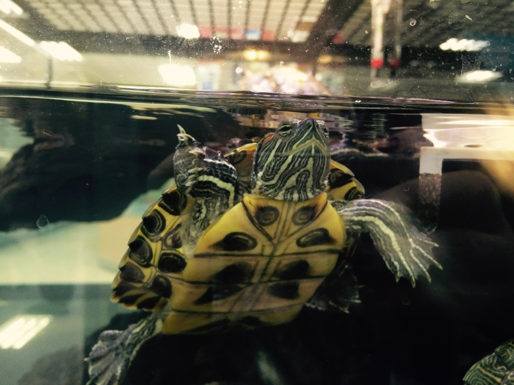 Turtles pet Petco Los Angeles