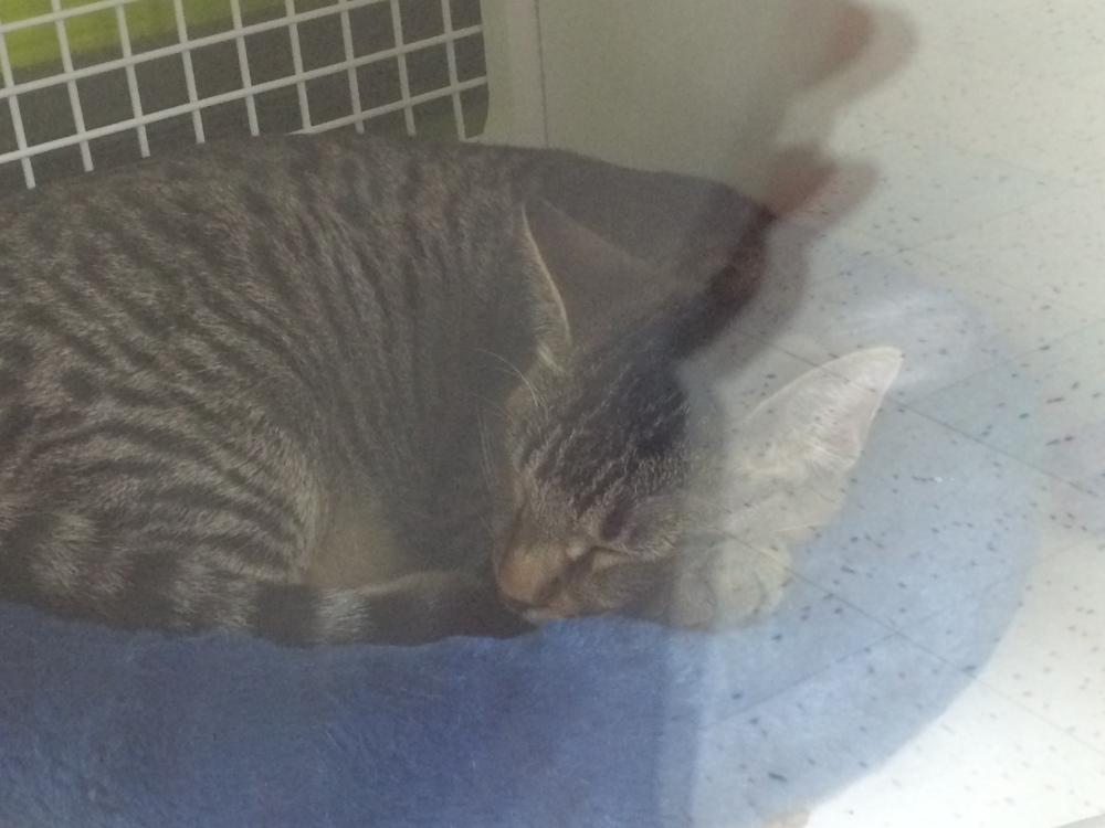 Adopt a Cat - Petco - Los Angeles California Labrea - sleeping