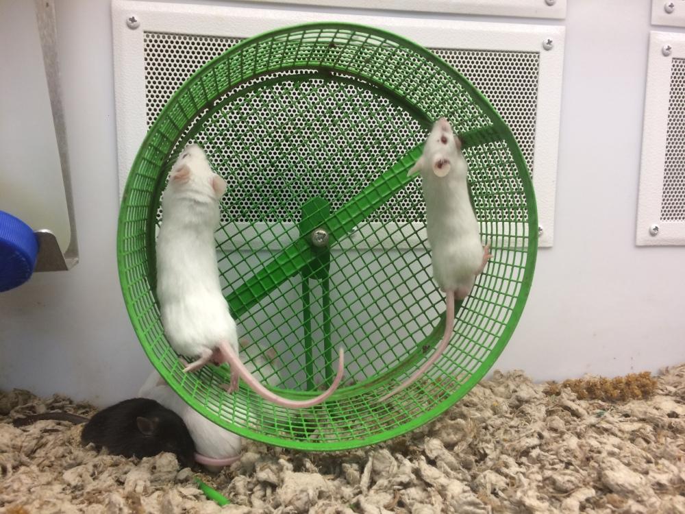 Mice - Petco - Los Angeles - Labrea